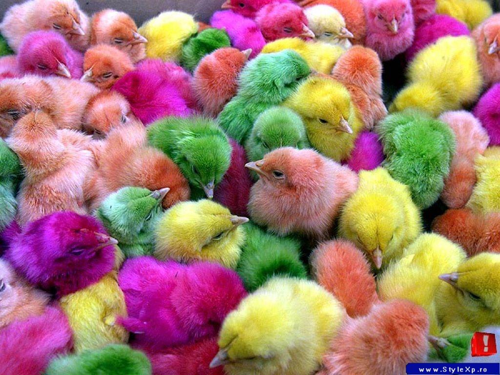 Colourful Birds Wallpaper Wallpaper Animals Birds