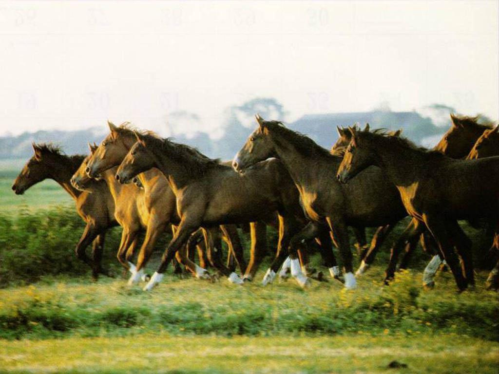horse wallpaper 003 1024 jpg wallpaper animals horses horse wallpaper