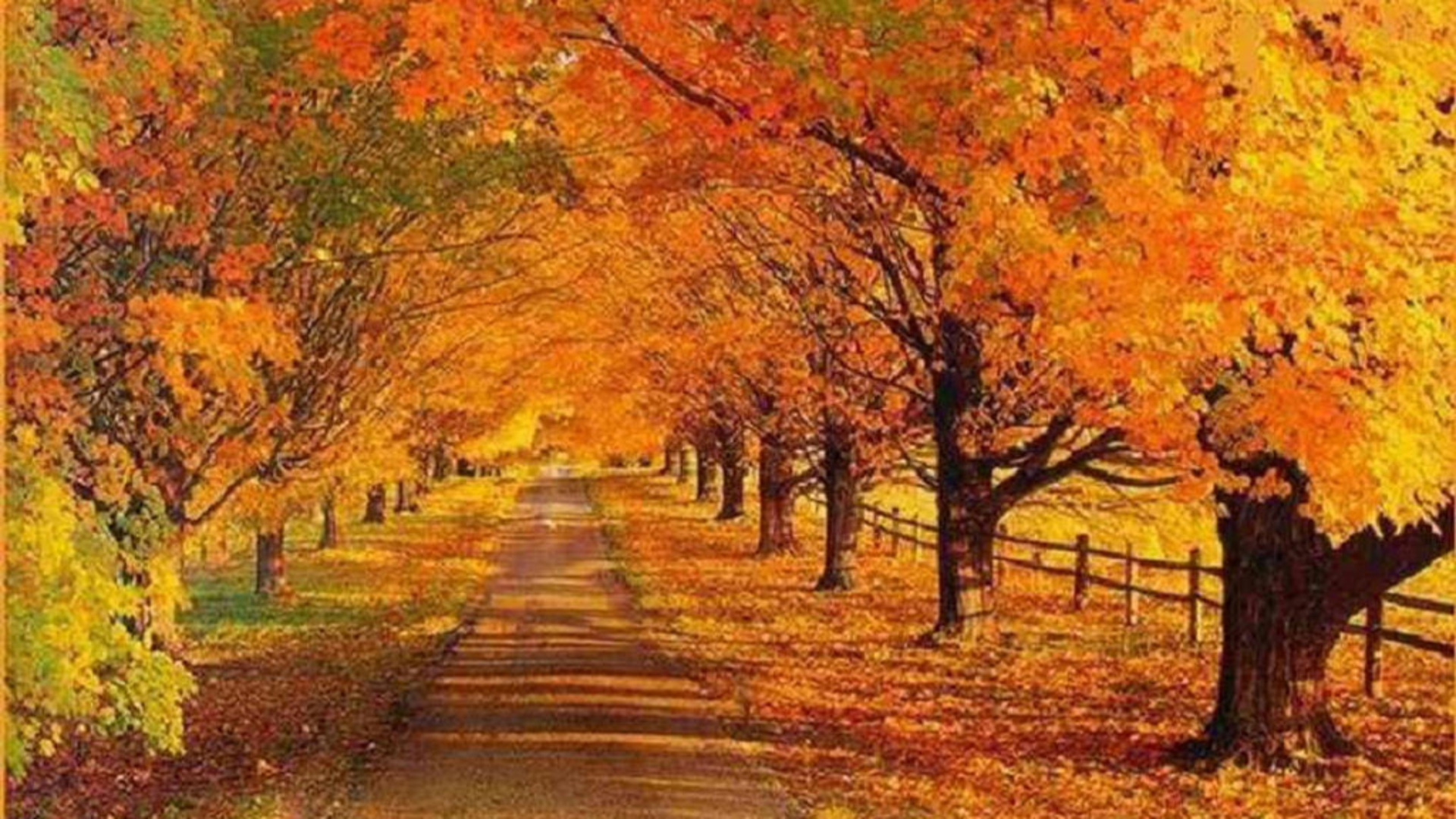 autumn road jpg wallpaper other landscape autumn road copyright od